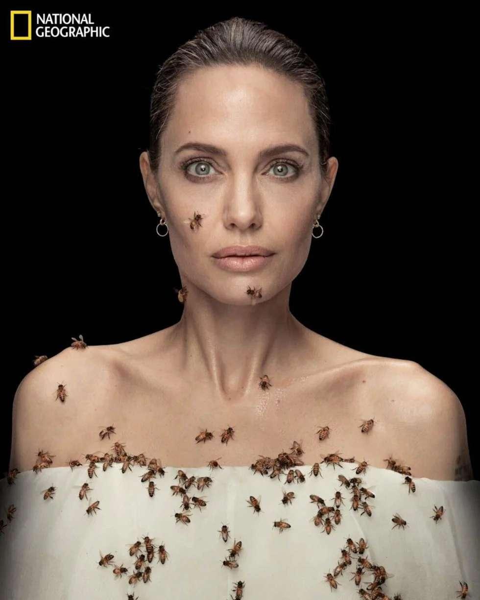 Celebra angelina jolie el día mundial de las abejas ...